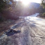 """A dead deer """"disappears"""" from Hwy. 243 in Idyllwild."""