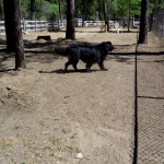 LeRoy strolls by an open area in the dog park that once had many trees