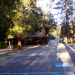 The hurt squirrel lived in the state park in Idyllwild