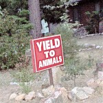 Yard sign outside Idyllwild home warning about squirrels, bunnies and deer.