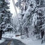Wes Rizor stands near tree fallen on power line