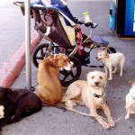 This cluster of canines was parked outside of Fairway Market recently