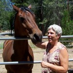 Sherman, the horse on Hwy. 243 is just fine, says Joyce, his owner