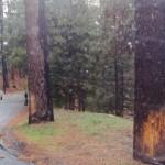 Trees 2 Tollgate