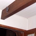 A young woodpecker clings to my ceiling beam at midnight