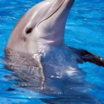 20,000 dolphins are slaughtered in Taiji, Japan, each year