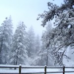 fence w:tree