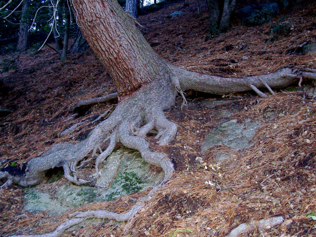 Essay on plant roots