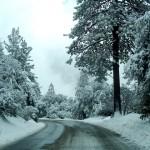 snow trees road