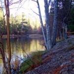 tree frame w leaves LF