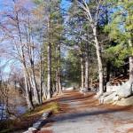 tree trail LF