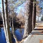 trees trail shadows LF